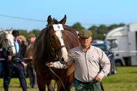 PUNCHESTOWN IDHBA SHOW, SEPTEMBER 2nd