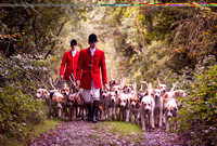 MORNING STROLL - KILKENNY FOXHOUNDS